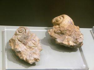 snailsmuseum