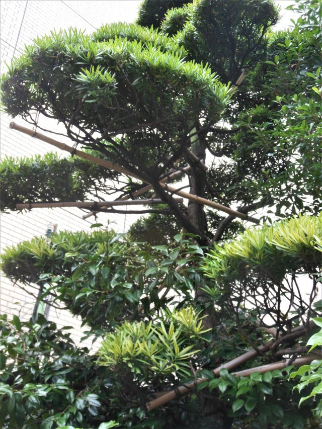 treebondage