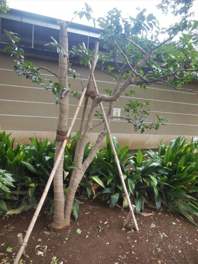 treechopsticks