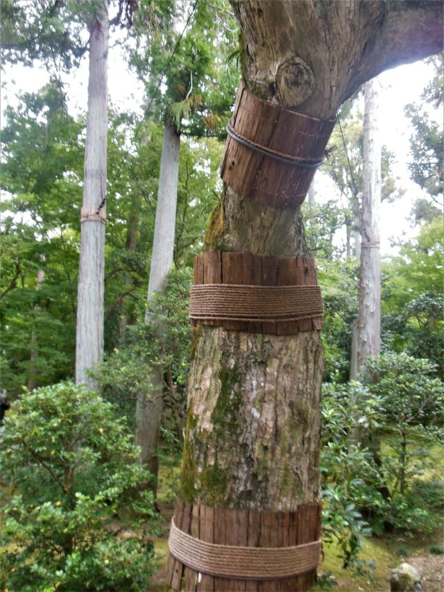 treegirle