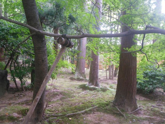 treeyanker