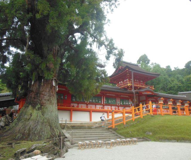 shrineandtree